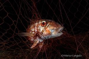 In the net by Marco Gargiulo