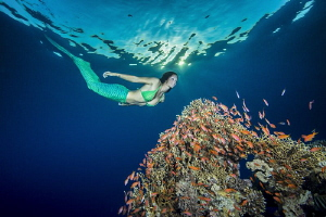 Mermaid over coral outcrop by Paul Colley