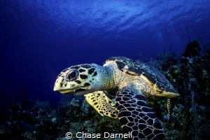 """""""Serious Face"""" West Wall, Grand Cayman by Chase Darnell"""