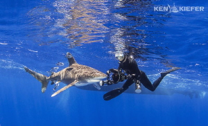 Oceanic Whitetip checks out her reflection in a dome port... by Ken Kiefer