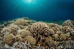 Pristine corals of the Tubbataha reef by Nadya Kulagina