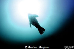 """Abducted""... the water was cold and full of seals and se... by Gaetano Gargiulo"
