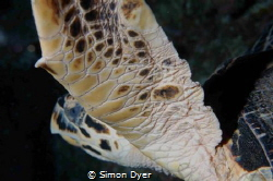 night dive with a sleepy turtle by Simon Dyer