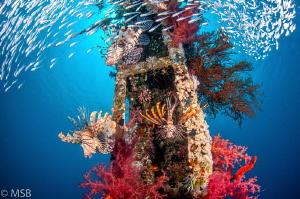 Cedar's pride wreck in Aqabe. by Mehmet Salih Bilal