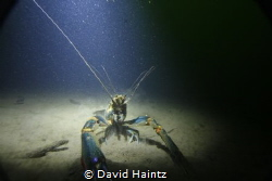 Red Claw at Lake Eacham, depth 20m by David Haintz