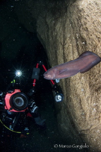 Arturo in the cave with Oligopus ater by Marco Gargiulo