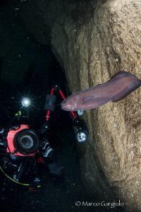 Arturo in the cave with Oligopus ater by Marco Gargiulo
