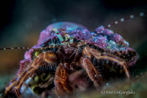 Little Pagurian Eyes by Marco Gargiulo