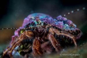 Little Pagurian Eyes by Marco Gargiulo