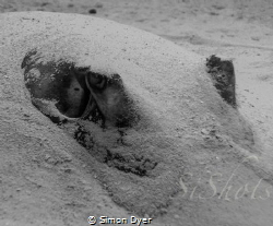 just a sandy ray by Simon Dyer