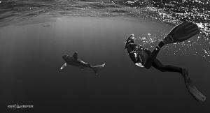 Freediver following an Oceanic Whitetip shark by Ken Kiefer