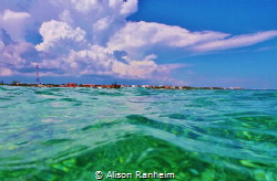 Snorkeling off a boat in the Yucatan, Puerto Morales, fis... by Alison Ranheim