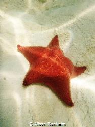 Sandy Bay, Roatan Honduras, beautiful spot for starfish! by Alison Ranheim