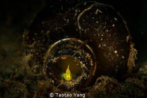 goby in bottle by Taotao Yang