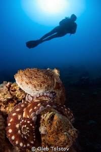 Octopus and diver by Gleb Tolstov