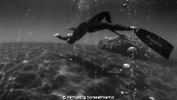 """""""Levitation"""" This photo shoot in one of the amazing dive... by Parnupong Norasethkamol"""