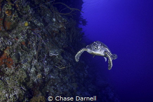 A wall like no other! Little Cayman you really are a spec... by Chase Darnell