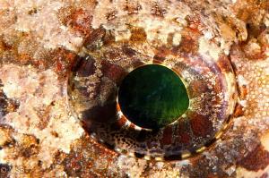 Emerald. by Mehmet Salih Bilal