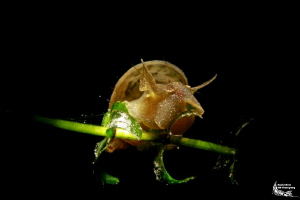 Snail with snoot :-D by Daniel Strub