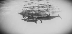 Dolphin Reef, Red Sea by Eddy Van Lier