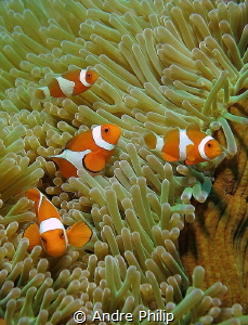 Nemo´s Party by Andre Philip