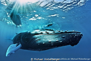 great encounter on the Silver Banks by Michael Weberberger