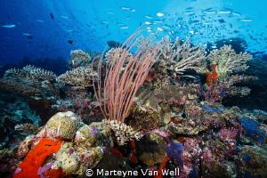 Seascape at Six Senses Laamu by Marteyne Van Well