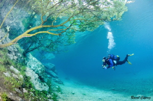 Diving under the trees by Raoul Caprez
