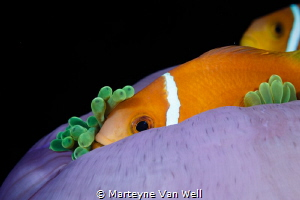 Nemo Found! by Marteyne Van Well