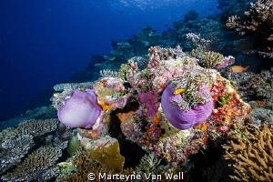 Seascape at Six Senses Laamu, Laamu Atoll by Marteyne Van Well