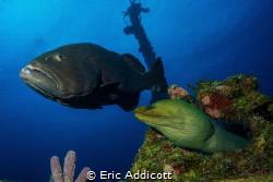 Friends on a wreck by Eric Addicott