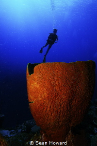 Barrel Sponge at the top of Ghost Mount in Cayman by Sean Howard