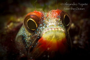 Blenny in Acapulco