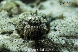 CROCODILE FISH CLASSICAL SHOT--EYE  Canon EOS 5D Mark ... by Kadir Suat Akca