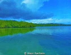 Where the ocean meets the Mangroves- salt water and fresh... by Alison Ranheim