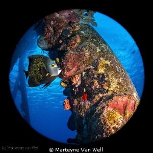 French Angelfish at Salt Pier in Bonaire by Marteyne Van Well