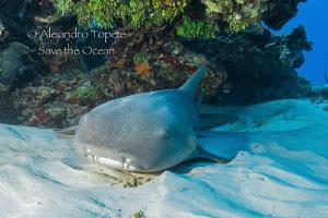 Great Nurse Shark Close UP by Alejandro Topete