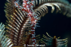 Ornate Ghost Pipe Shot on the 2nd day of shooting with n... by James Deverich