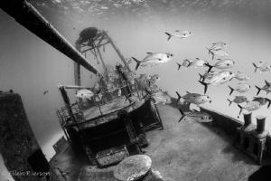 Kittiwake, Grand Cayman by Ellen Rierson