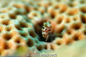 Been a long while since i took any photos underwater, it ... by Arun Madisetti