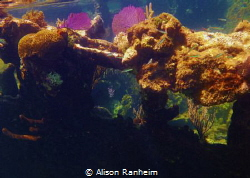 Sunken ship off the coast of Roatan by Alison Ranheim
