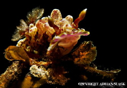 nudi's got the hump, Ponta Do Ouro Mozambique by Adrian Slack
