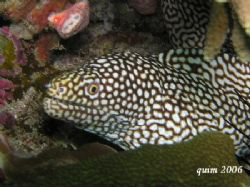 moray eel... @ 30 feet, no strobe, just the built-in flas... by Fra-And Quimpo