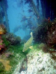 Aughrus reef,Connemara. F90X,20mm. by Mark Thomas