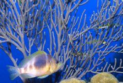 Finding a Fish & a Sea Fan. Nikonous RS in Bon Aire. by David Spiel