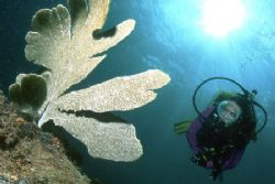 Diver gently looks at the move of a Gorgony. by Francisco Nakahara