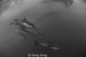 Dolphins under the boat by Gang Song