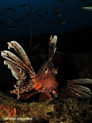Lionfish @ the depths of Atlantis by Adrian Slack