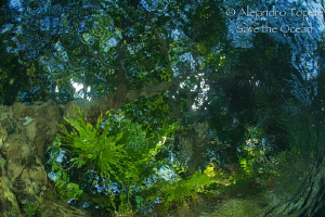 Colors in the cenote by Alejandro Topete
