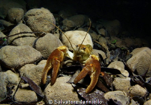 Crayfish Park of Cilento Italy by Salvatore Ianniello